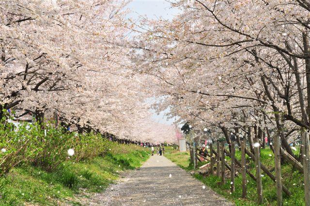 http://kawasemi.blog.so-net.ne.jp/_images/blog/_f88/kawasemi/EFBC90EFBC98E38080EFBC94E69C8820101.jpg